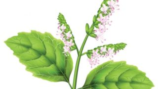 What Is Digize Essential Oil Used For