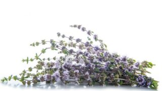 8 Amazing Uses of Pennyroyal (Mentha Pulegium)