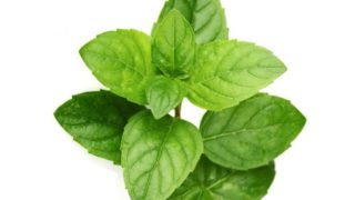 22 Amazing Benefits of Peppermint