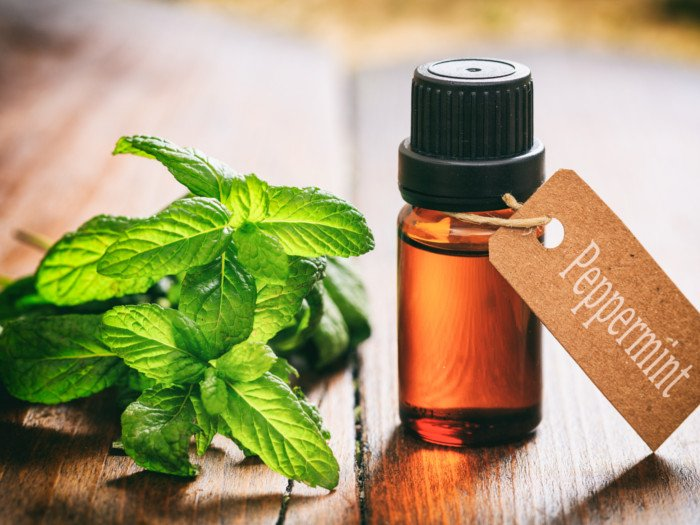 A bottle of peppermint oil with a fresh twig on a wooden table