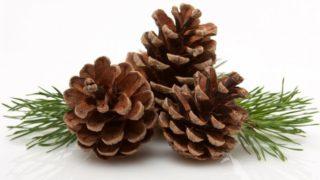 5 Incredible Benefits of Pine
