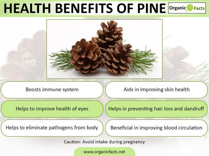 pineinfo