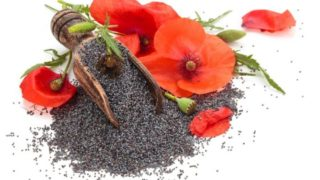 10 Impressive Benefits of Poppy And Its Seeds
