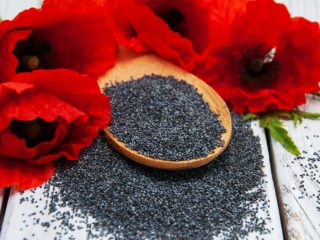 6 Proven Benefits Of Poppy Seed Tea Organic Facts