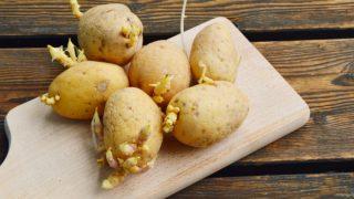 8 Ways to Control Potato Sprouts