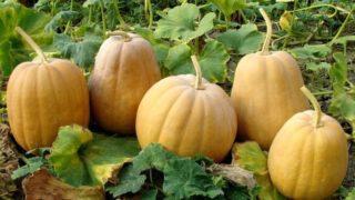 Pumpkin: Health Benefits, Nutrition & Types