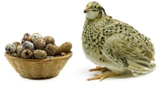 9 Surprising Benefits of Quail Eggs