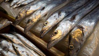 9 Amazing Health Benefits of Ribbon Fish