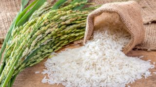 Fresh rice sprig and a small sack of white rice falling on a wooden table