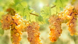 Riesling – Types & Nutrition