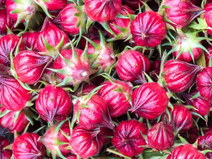 Close-up of rose buds