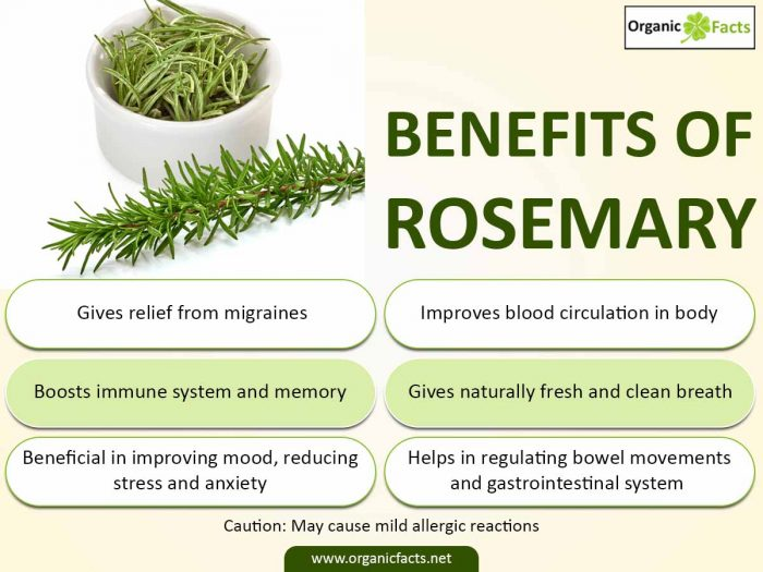 26 Impressive Benefits Of Rosemary Organic Facts