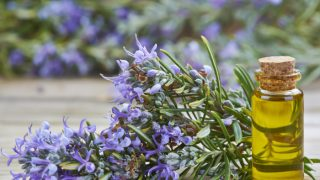 16 Proven Benefits of Rosemary Oil