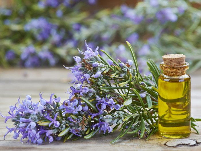 A bottle of rosemary oil with a rosemary plant