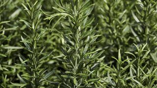 7 Amazing Substitutes for Rosemary
