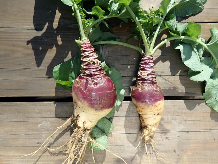9 Interesting Benefits Of Rutabaga Organic Facts