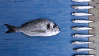 Sardines vs Anchovies