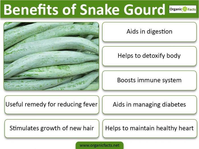 7 Impressive Benefits Of Snake Gourd Organic Facts