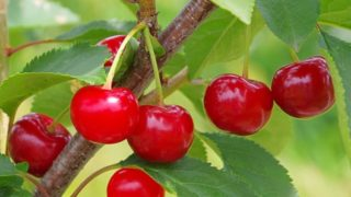 9 Amazing Health Benefits of Tart Cherry Juice