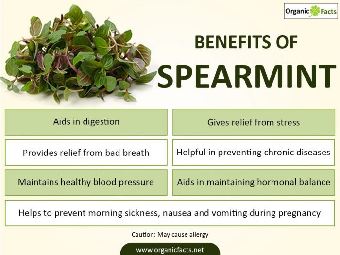 spearmintinfo