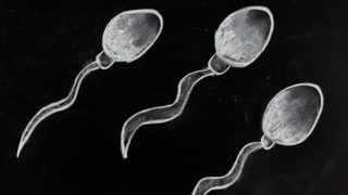 15 Ways to Increase Sperm Count