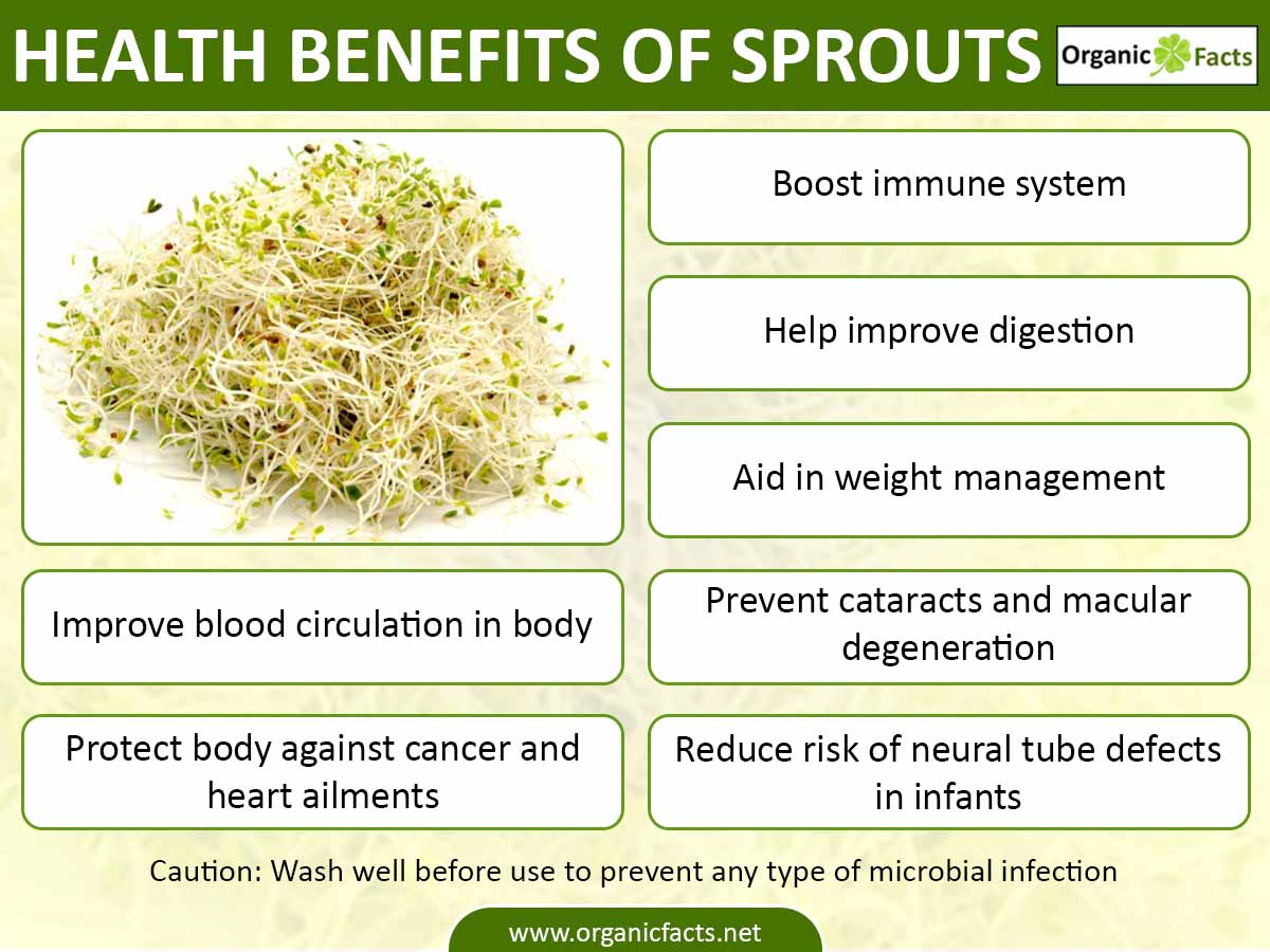 sproutsinfo02