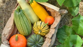 8 Types of Squash Fruits You Need to Know