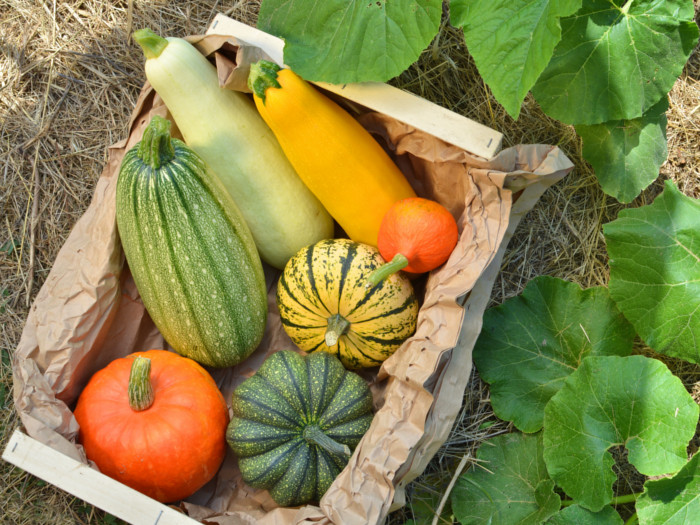 Squash: Top 5 Benefits & How To Use | Organic Facts