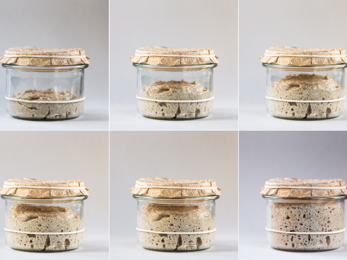 Pics showing different stages of sourdough starter