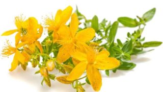 St John's Wort Oil: Benefits & How to Make