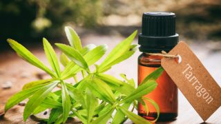 14 Best Benefits & Uses of Tarragon