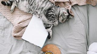 7 Best Teas For A Good Night's Sleep