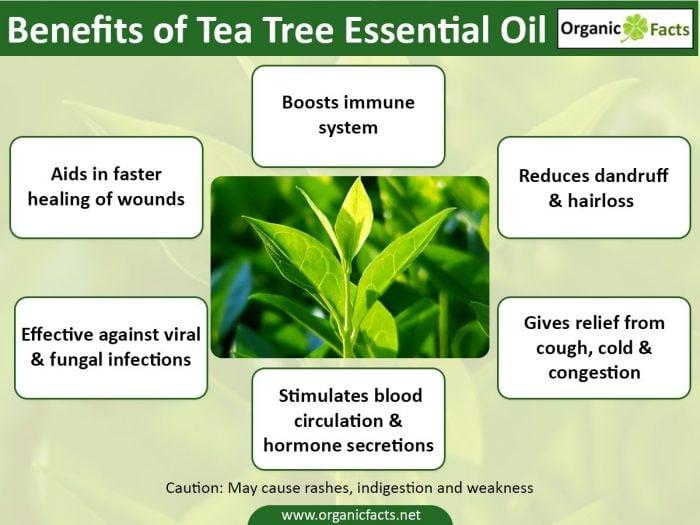 13 Amazing Benefits of Tea Tree Essential Oil