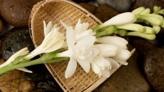 8 Amazing Benefits of Tuberose