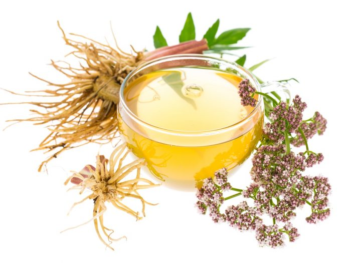 A cup of valerian root tea, kept next to valerian root and flowers, against a white background