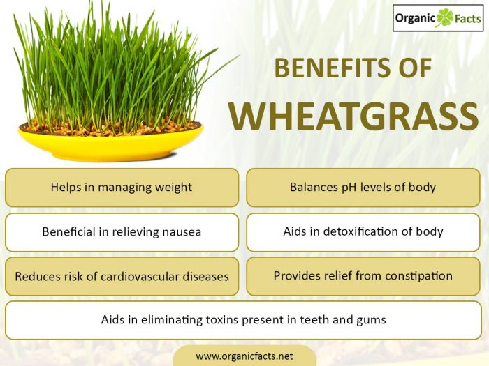 wheatgrassinfo