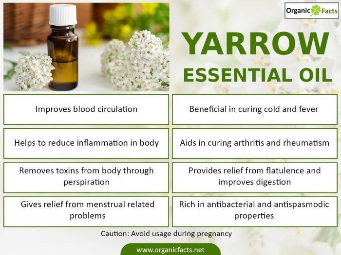 20 Best Benefits Of Yarrow Essential Oil Organic Facts