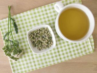 8 Surprising Benefits of Yarrow (Achillea Millefolium) | Organic Facts