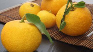 13 Surprising Benefits of Yuzu Fruit